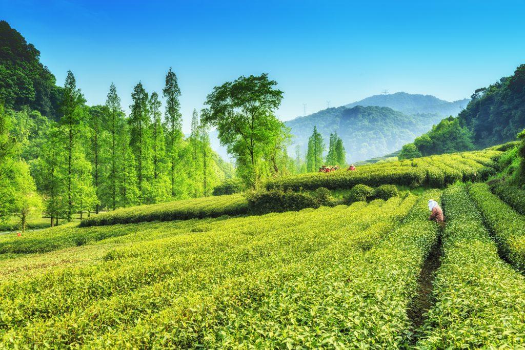 Le secteur agricole en Turquie